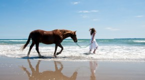 How to insure your horse