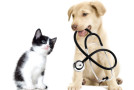 Trusted benefits of medical insurance for cats and dogs