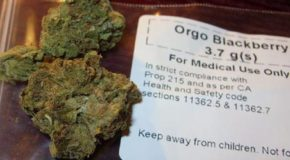 Medical Pot Covered By Health Insurance? Look to Canada and See the Future